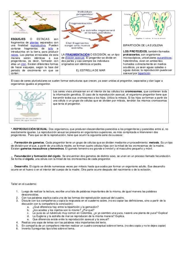 Fragmentation definicion reproduccion asexual de plantas