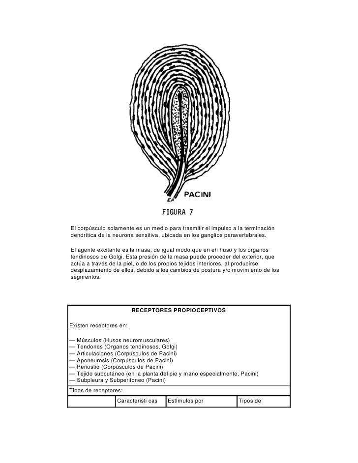 2 tecnicas_de_stretching_para_la_kinesiologia