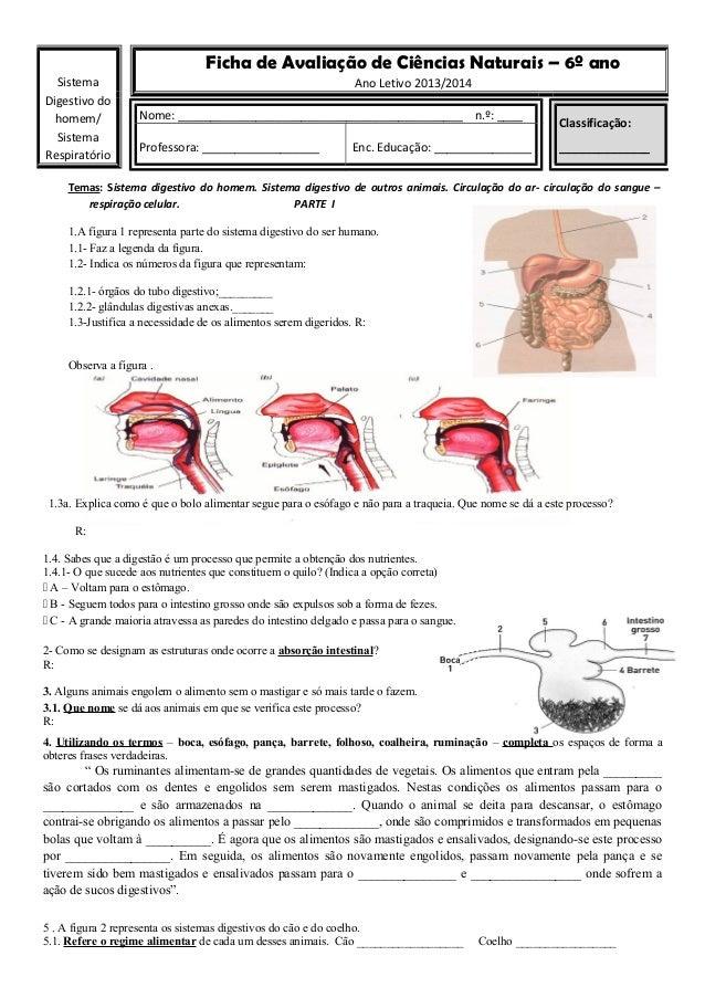 Ficha de Avaliação de Ciências Naturais – 6º ano Sistema Digestivo do homem/ Sistema Respiratório  Ano Letivo 2013/2014 No...