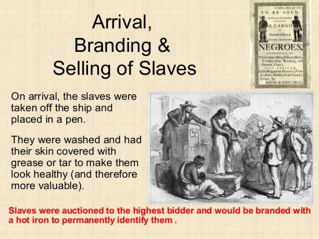 Trans atlantic slave trade essays