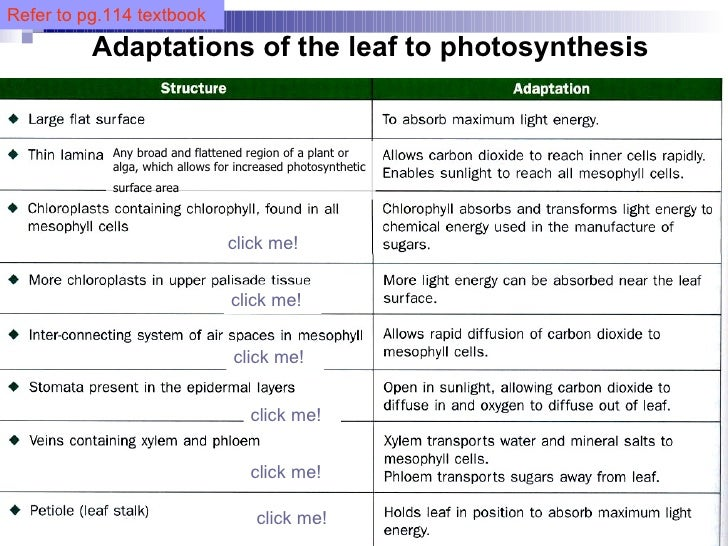 Chapter 7 Nutrition in Plants Lesson 2 Transport of water and miner – Plant Adaptations Worksheet