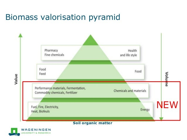 How To Make A Biomass Pyramid