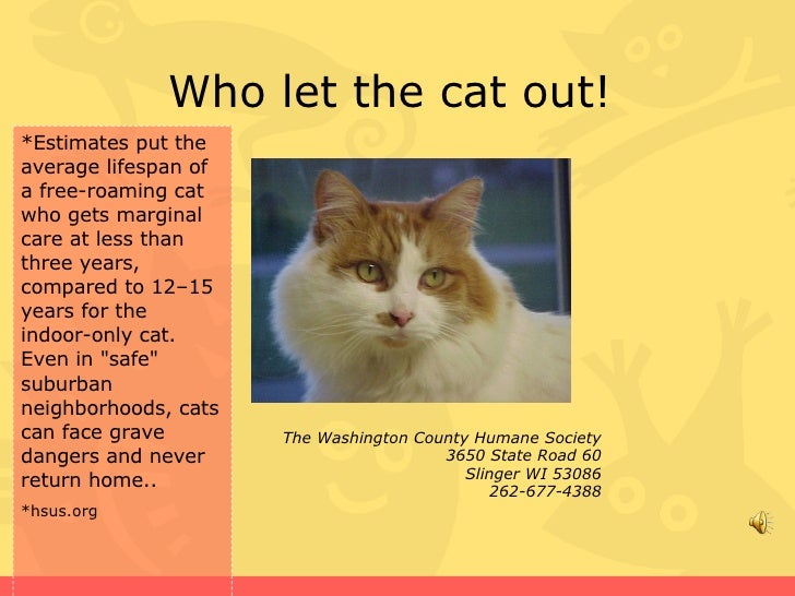 Who let the cat out!  The Washington County Humane Society 3650 State Road 60 Slinger WI 53086 262-677-4388 *Estimates put...