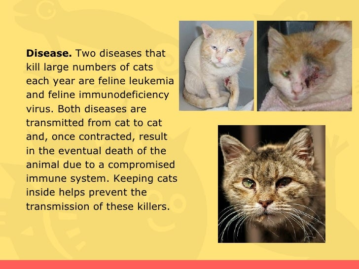 Stray Cat Diseases Transmitted Humans