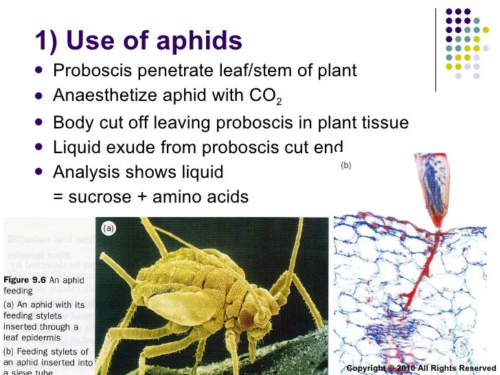 All About Aphids, and How to Kill Them - Gardening Channel