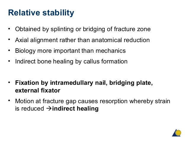 biomechanics and biology of relative stability, Muscles
