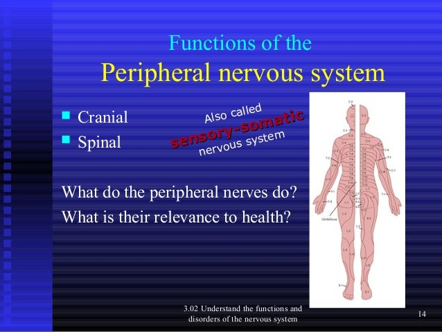 the autonomic nervous system understanding essentials A clinical overview of the nervous system related book clinical anatomy for dummies by david terfera, shereen jegtvig the autonomic nervous system works with the involuntary parts of the body, including the muscles of the heart.