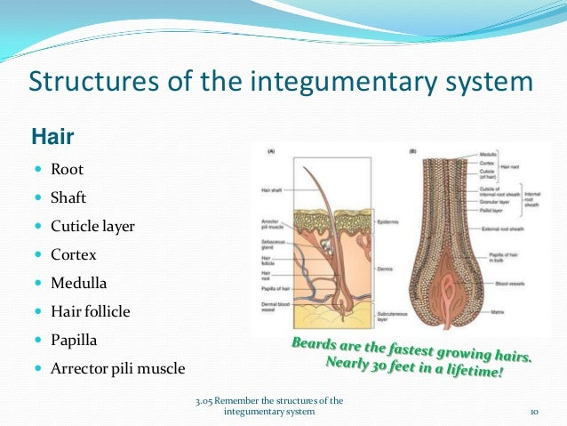Structures of the Integumentary System