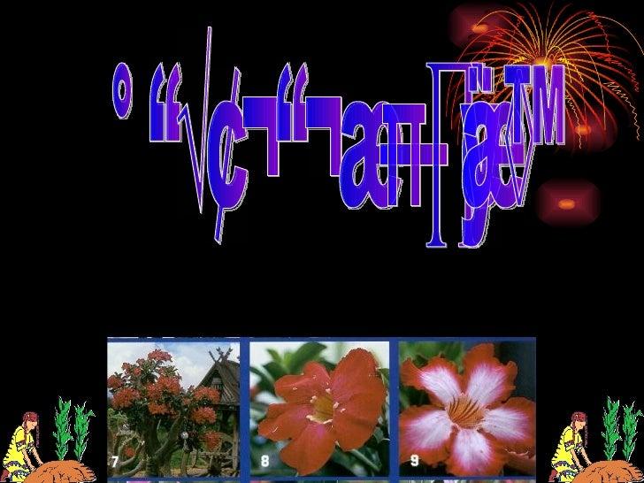 การขยายพันธุ์พชคือ                 ื อะไร     การขยายพันธุ์พืชหมายถึง การเพิ่มปริมาณต้นพืชจากต้นแม่เพียงต้นเดียว ให้มีจำาน...