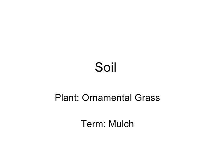 Soil  Plant: Ornamental Grass Term: Mulch