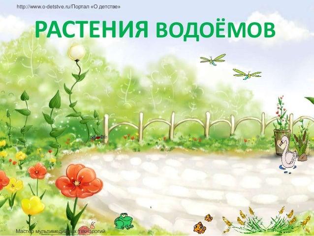 http://www.o-detstve.ru/Портал «О детстве»      РАСТЕНИЯ ВОДОЁМОВМастер мультимедийных технологий