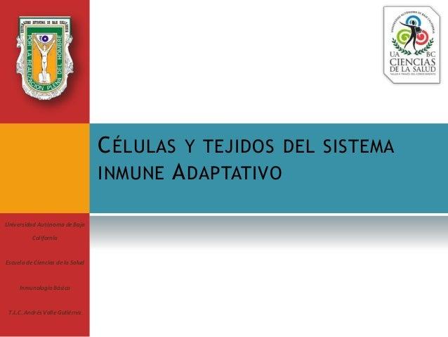 CÉLULAS Y TEJIDOS DEL SISTEMA INMUNE ADAPTATIVO Universidad Autónoma de Baja California Escuela de Ciencias de la Salud In...