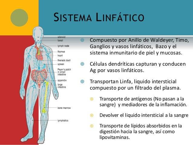 3. Células y Tejidos del Sistema Inmunitario Adaptativo