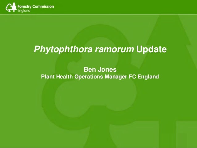 Phytophthora ramorum Update Ben Jones Plant Health Operations Manager FC England
