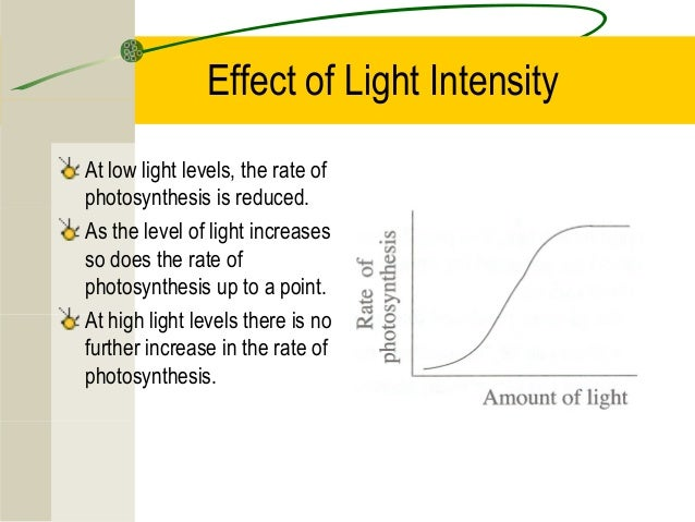 how light intensity effects transpiration rate Transcript of plant transpiration lab quality and intensity of light affect the rate of transpiration 1 set up plant according the ap biology lab manual.