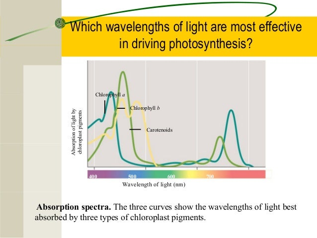 What two colors of light are most effective in photosynthesis approach to bleeding diathesis