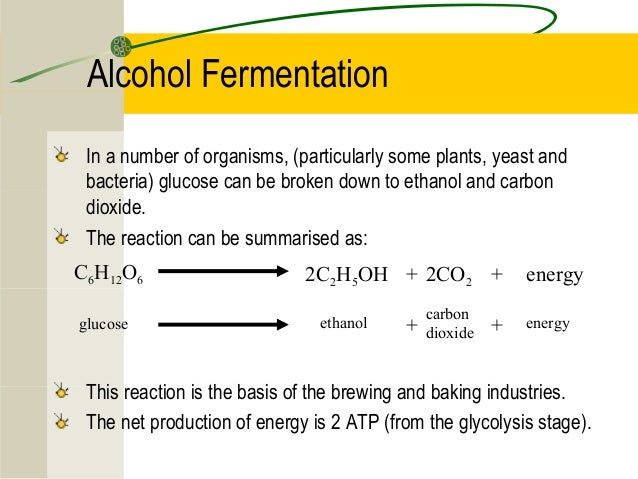 Alcoholic Fermentation Products And Reactants Wwwpicsbudcom