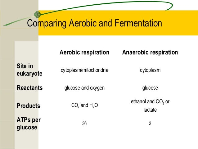respiration cell cellular aerobic anaerobic fermentation comparing atp