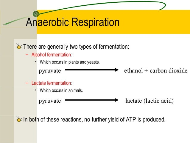 Anaerobic Respiration Introduction Lessons Tes Teach