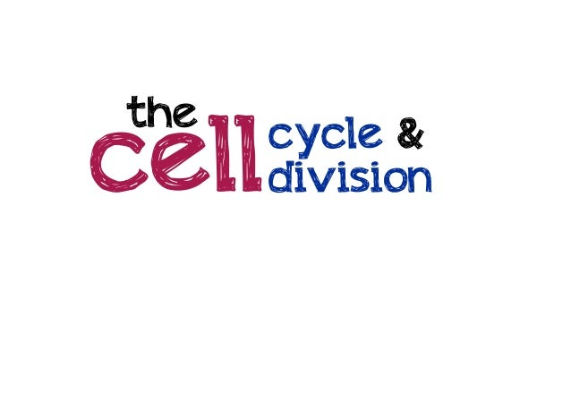 the  cell  cycle & division