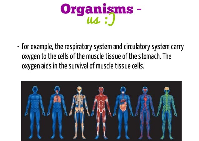 Levels Of Organization Cell To Organism