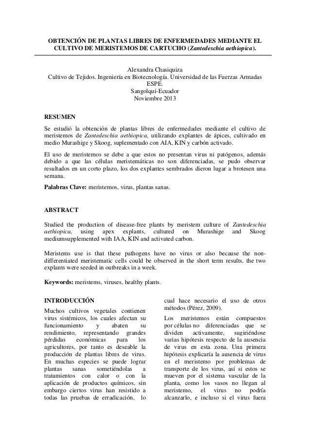 OBTENCIÓN DE PLANTAS LIBRES DE ENFERMEDADES MEDIANTE EL CULTIVO DE MERISTEMOS DE CARTUCHO (Zantedeschia aethiopica).  Alex...
