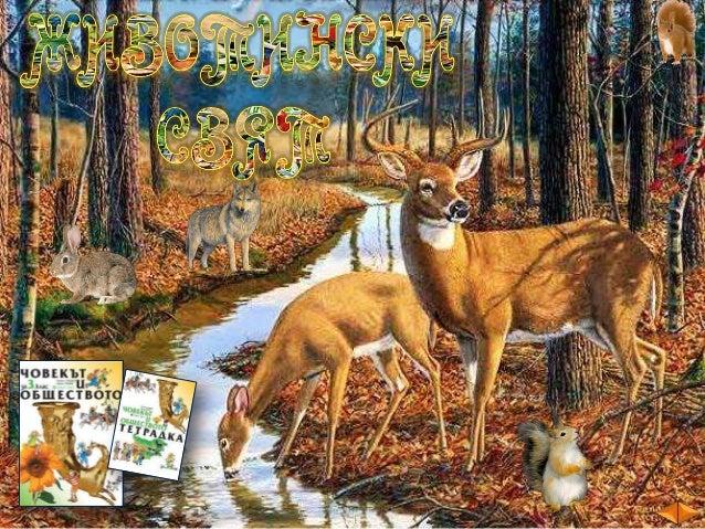 план  Богат е животинският свят в България.