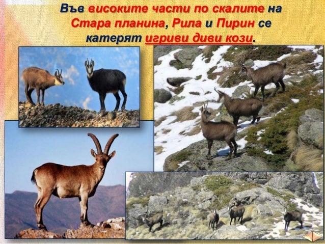 Голямо е разнообразието от животни и в равнините и низините.  план