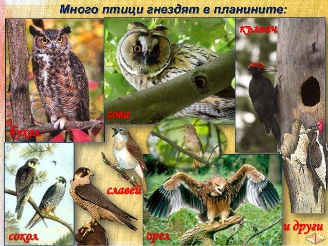 В по-ниските части на страната – Дунавската равнина, Горнотракийската низина и полетата, се срещат животни, обитаващи почв...