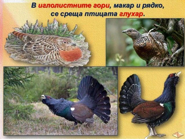 От птиците тук живеят фазан, яребица, пъдпъдък.  фазан  пъдпъдък  яребица