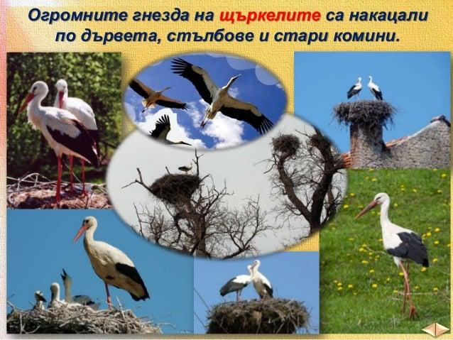 Разнообразен е животинският свят и във водите.  план