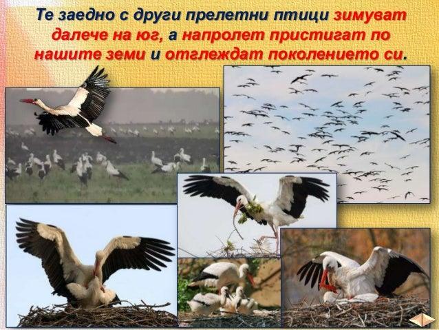 В реките и езерата има различни риби:  пъстърва шаран  сом  щука мряна  и други
