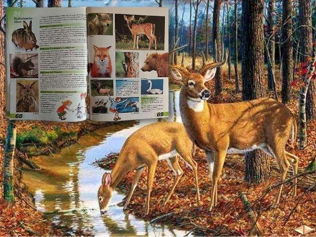 Животни има както в равнините и низините, така и в планините и водите на България.