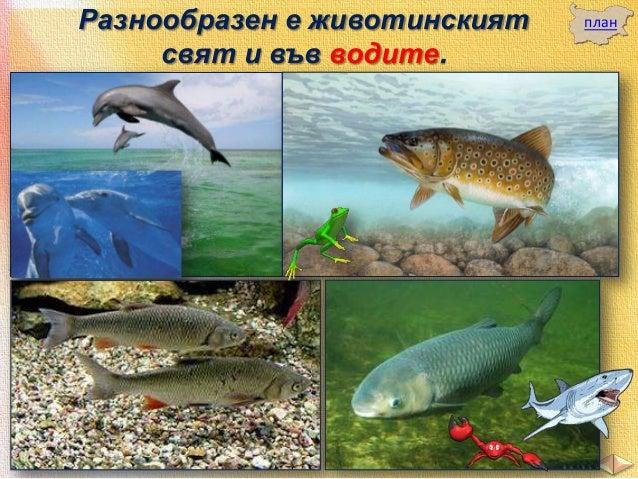 Във водите на Черно море живеят ценни видове риби.