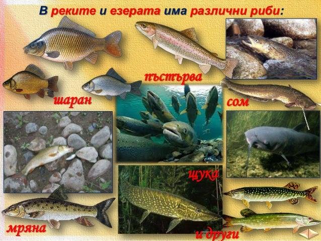 Морските брегове са обитавани от миди и раци.  раци  миди актиния