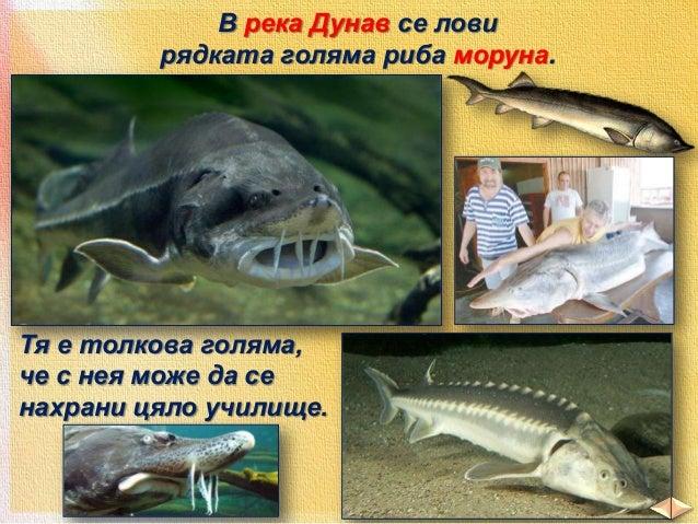 скариди  медузи  калмари и други октоподи