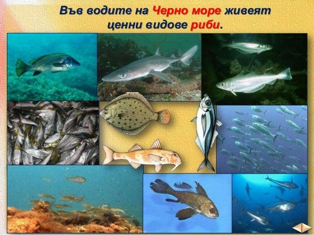 Делфини порят сините крайбрежни води.