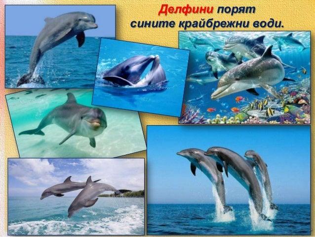Редица животински видове са защитени от закона. Те са записани в Червената книга на България.  http://e-ecodb.bas.bg/rdb/b...