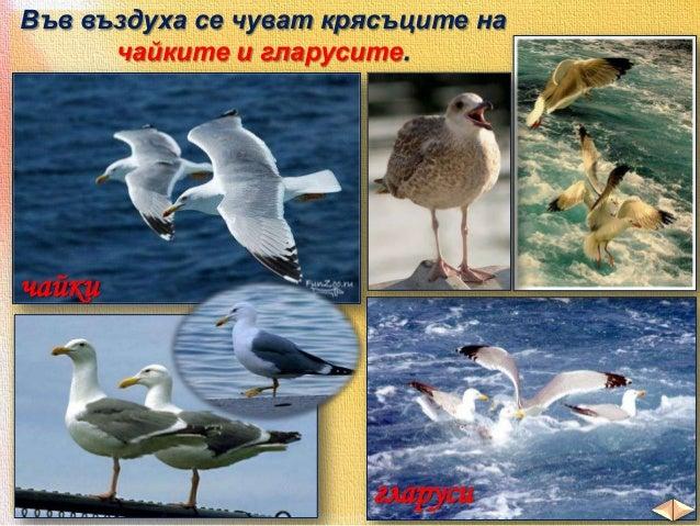 Сред защитените животни са:  рисът  видрата  пеликанът  лебедът  и други