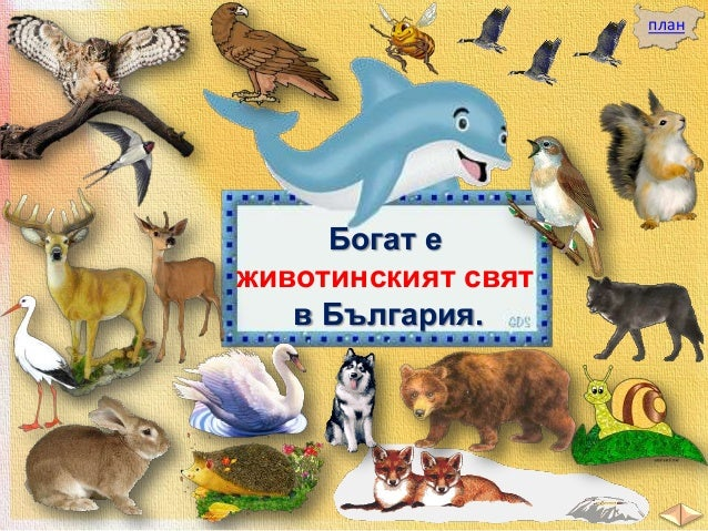 Всяко от тях си търси благоприятни условия за живот.  лебед заек катеричка  бухал  елен мечка  лисица  щъркели  вълк сърна...