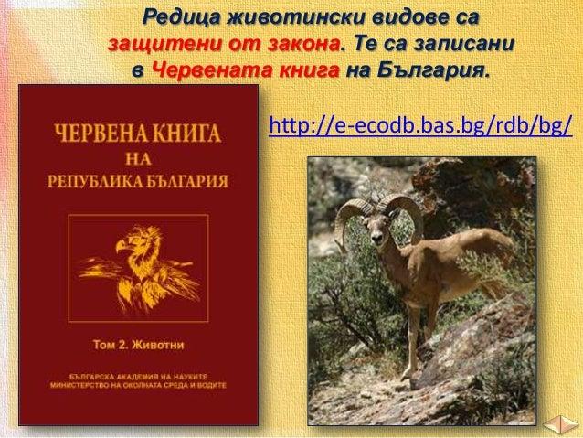 2. Огради верния отговор. А. Къде НЕ можете да срещнете мечка?  а/ Пирин б/ Рила в/ Дунавската равнина Б. Дивите кози обит...