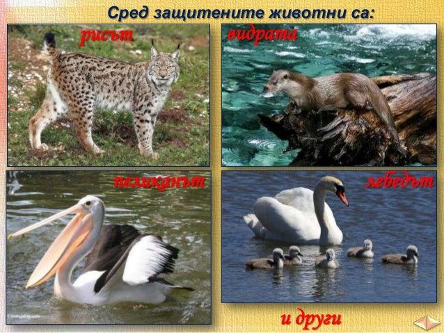 2. Огради верния отговор. В. Кое от животните е характерен обитател на пещерите?  а/ таралеж б/ прилеп в/ глухар Г. Кое от...