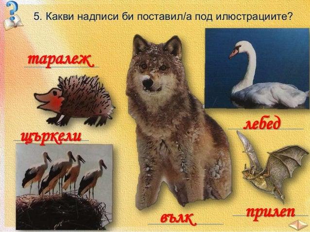 1. Животински свят 2. Животни в планините 3. Животни в равнините и низините 4. Животни във водите 5. Животните – природно ...