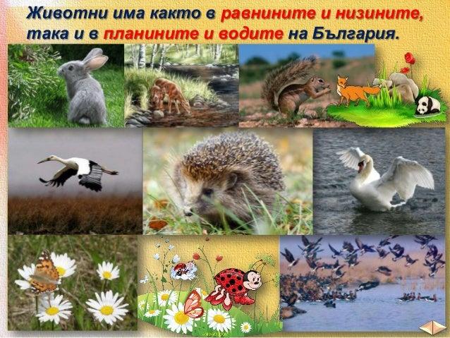 Горите в нашите планини приютяват много животни.  план