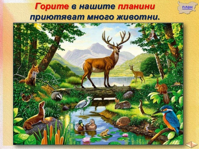 В горите животните намират и места, където да се скрият от неприятелите .