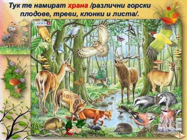 В планините се срещат:  сърни и елени  мечки  глигани  птици вълци змии  таралежи  зайци  лисици  катерички  и други