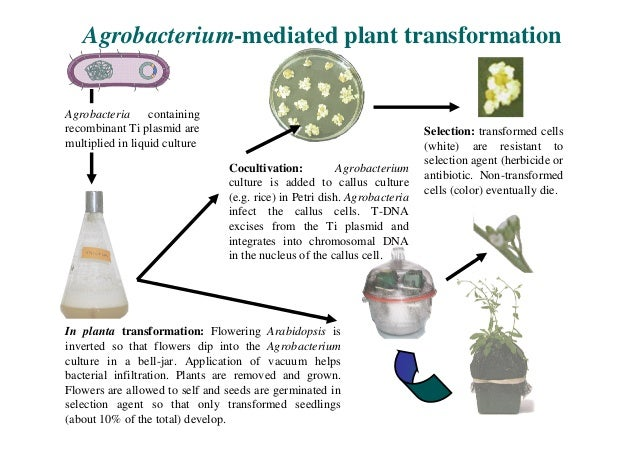 A Plant That Is Able To Make Its Own Food