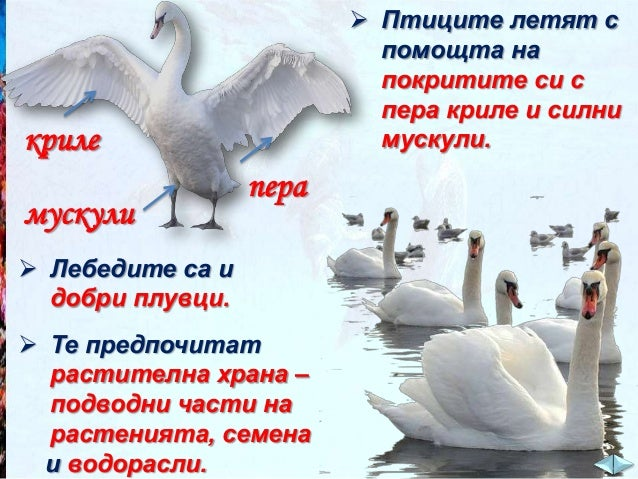 Кои от следните животни обитават Черно море? Кликни върху названието на животното.  делфин  кит цаца  медуза скарида  шара...