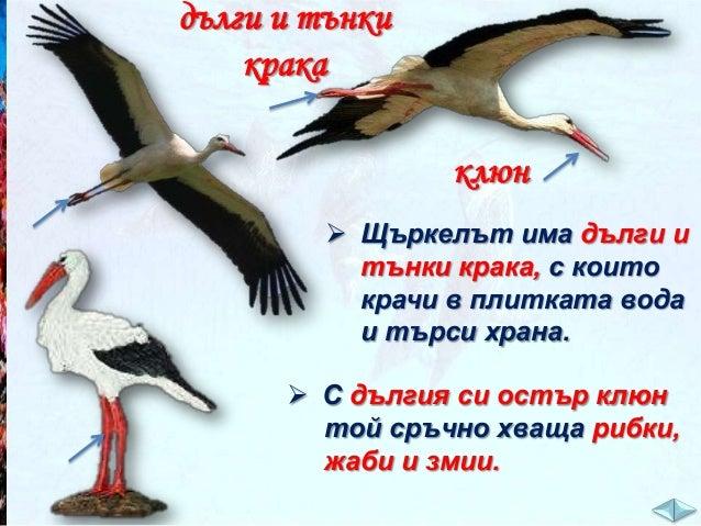 Кое от следните морски животни се движи най-бързо? а/ рак;  в/ скумрия.  б/ рапан;  Подредете тези морски животни в една х...