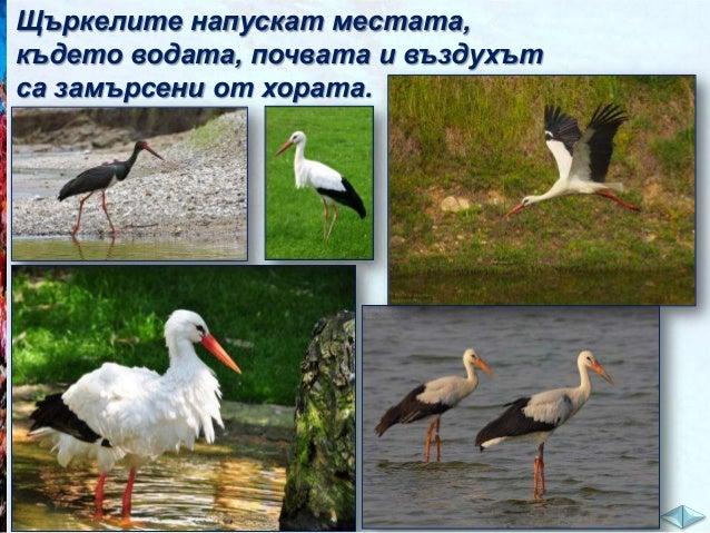 Шаранът се храни с:   дребни морски животни; ___________________________ ___________________________  растителна храна. ...